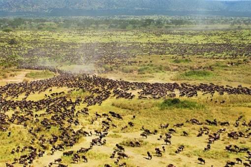 100921-Serengeti-hmed-1a_grid-10x2