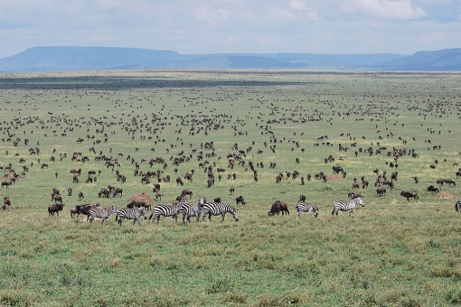 african-safari-serengeti-may-28-2009