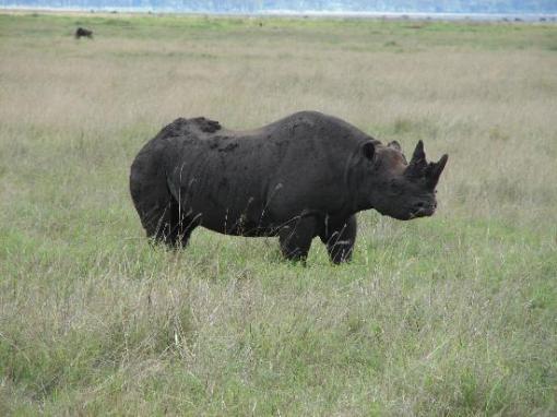 black-rhino-in-ngorongoro