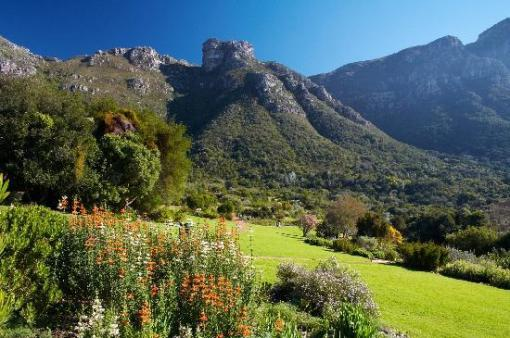 kirstenbosch-national