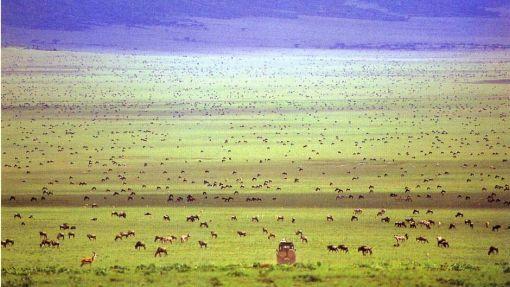 serengeti-nomad-gol_940_529_80_s_c1