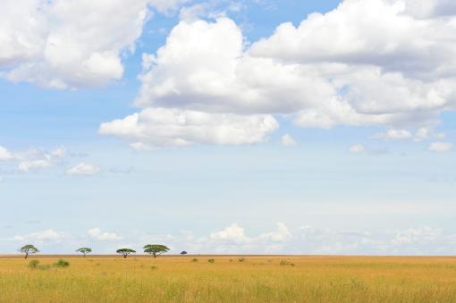 Serengeti_plains
