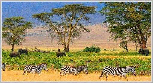 Zebras-on-Serengeti-plains-818x449