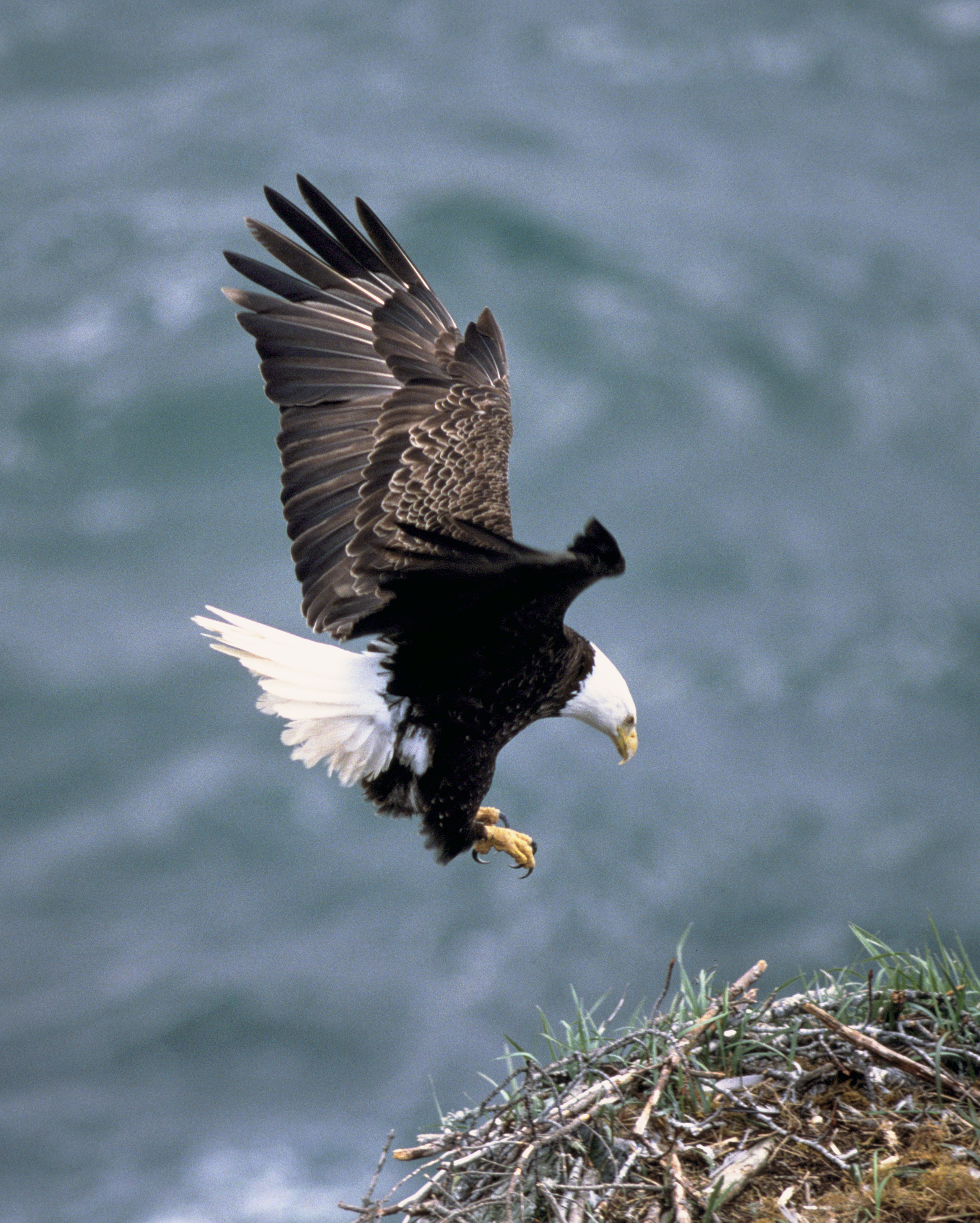 Characteristics of an eagle in the bible