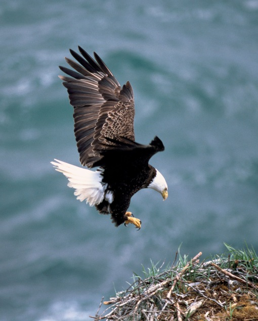 7 Highly Effective Habits Of Eagles Parents Alliance Of Prince