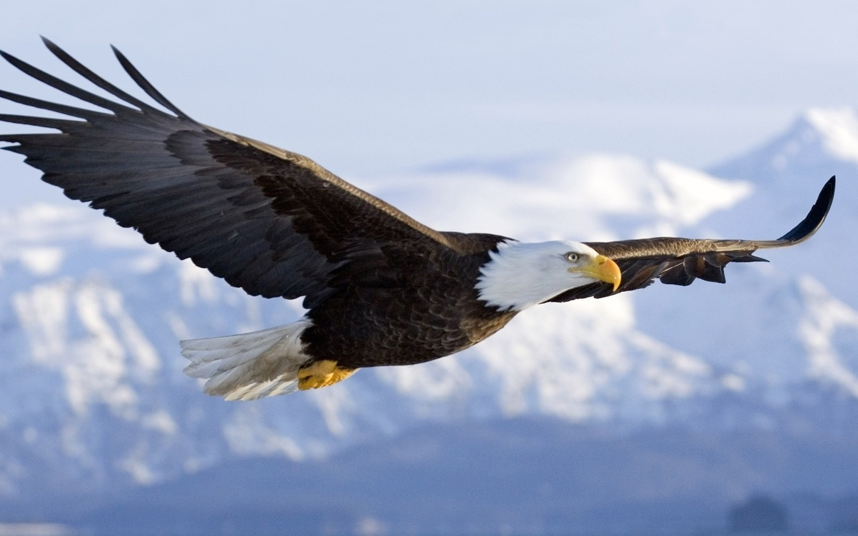 Physical Characteristics Of A Bald Eagle