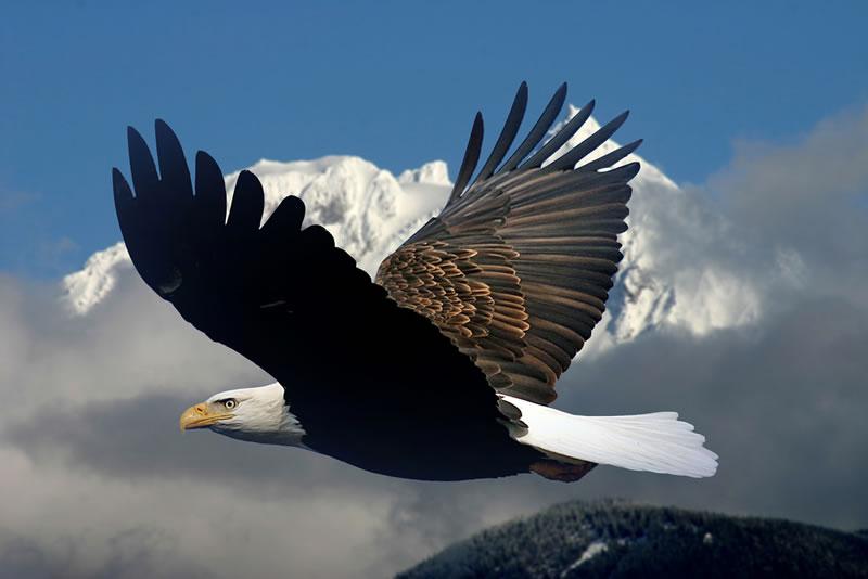 chim săn mồi , tượng đại bàng , tai anh dep nhat the gioi