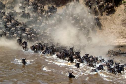 kenya annual migration