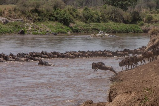 serengeti-north-41