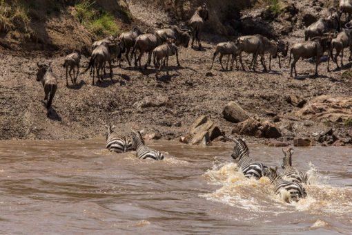 serengeti-north-45