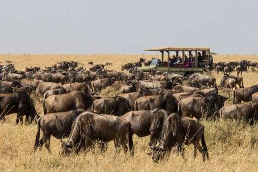 serengeti-north-59