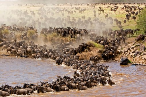 Wildebeest-Migration-Safari1