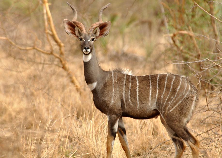 antelope county hispanic singles Antelope county, nebraska 2012-2013 prepared by: juvenile justice institute university of nebraska omaha anne m hobbs, jd, phd,  hispanic 1 100%.