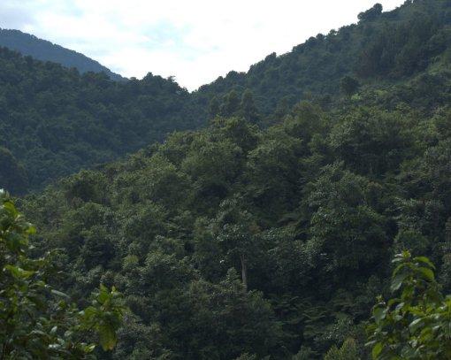 1-nkuringo-group-habitat