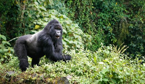 54RW06-IM1173-virunga-mountains-1475