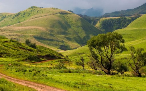 a-small-road-through-zululand