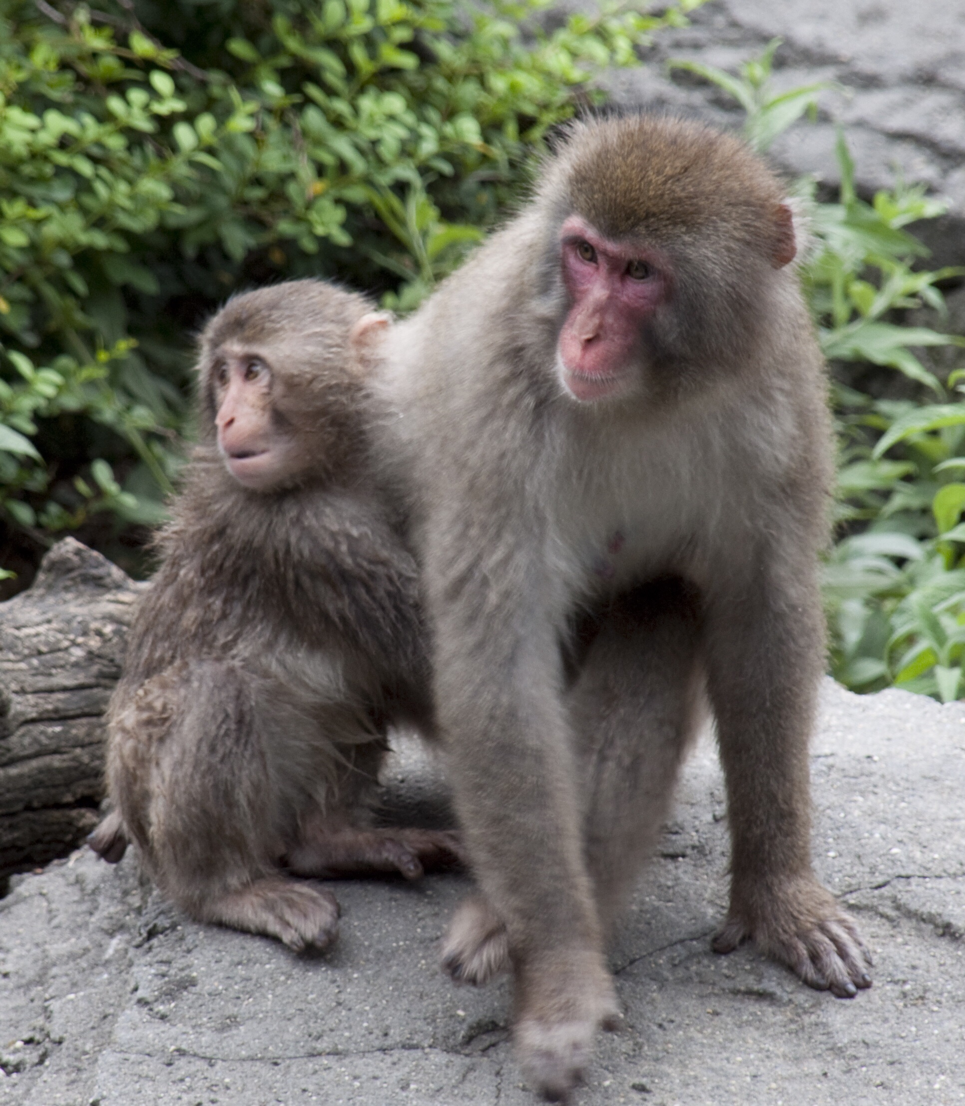 Monkey Stock Photos And Images - RF