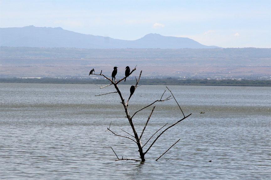 perched-on-lake-naivasha