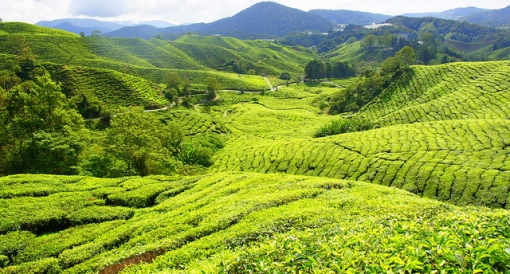 The-Adventures-Of-Greg-Jacobs-www.greg-j.com-World-travel-blog-family-holiday-vacation-website-The-Popular-Cameron-Highlands-In-Malaysia-Tanah-Rata